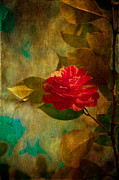 Texturing Posters - The Lady of the Camellias Poster by Loriental Photography