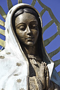 Gold Star Mother Posters - The Lady Prays Poster by Terry Rowe