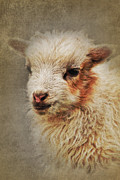 Angela Doelling AD DESIGN Photo and PhotoArt - The Lamb
