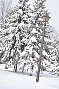 Frederico Borges Photos - The lamp and the tree by Frederico Borges