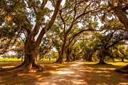 Live Oaks Digital Art Framed Prints - The Lane 2 Framed Print by Steve Harrington