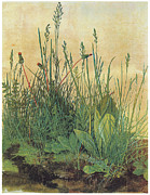 Beautiful Flowers Paintings - The Large Piece of Turf by Albrecht Durer