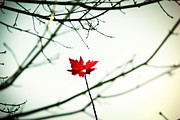 David Schoenheit - The Last Autumn Leaf