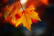 Yellow Leaves Posters - The Last of the Autumn Leaves Poster by Nishanth Gopinathan