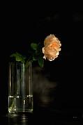 The Last Rose Of Summer Print by Theresa Tahara