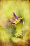 Textured Floral Digital Art Prints - The Last Violet Print by Lois Bryan