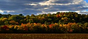 Indiana Autumn Metal Prints - The Layers of Autumn Metal Print by Julie Dant