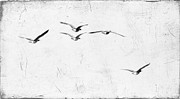 Black And White Birds Prints - The Leader Print by Rebecca Cozart