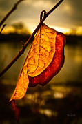 Leaves Photo Posters - The Leaf Across The River Poster by Bob Orsillo