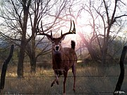 Whitetail Digital Art - The Leap by Bill Stephens