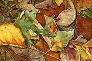 Macro Paintings - The Leaves Beneath My Feet by Vicky Watkins