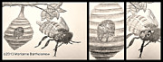 Sketchbook Prints - The Life of The Bee Print by Marianne Bartholomew