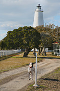 Dog Print Photo Prints - The Lighthouse Guardian Print by Steven Ainsworth