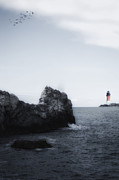 Seagull Photo Prints - The Lighthouse Print by Joana Kruse