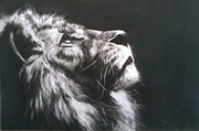 Charcoals Drawings Framed Prints - The Lion Framed Print by Putra Helmy