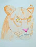 Lioness Drawings Posters - The Lioness Poster by Lori Ball