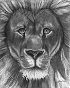Lion Drawings Framed Prints - The Lions Stare Framed Print by J Ferwerda