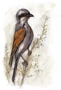 Bird Drawings Originals - The Little Bird On The Twig by Angel  Tarantella