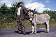 Joe Cashin - The little Donkey