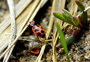 Lindsey Henderson - The Little Lady Bug That...