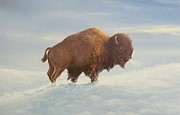 Don Griffiths - The lone Buffalo