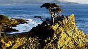 Bob and Nadine Johnston - The Lone Cypress Carmel...
