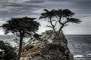 Big Sur Beach Originals - The Lone Cypress by Eduard Moldoveanu