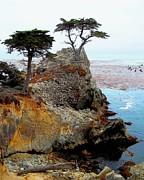 Ocean Scenes Prints - The Lone Cypress - Pebble Beach Print by Glenn McCarthy Art and Photography