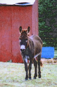 Quite Digital Art Posters - The Lonely Donkey Poster by Kay Novy