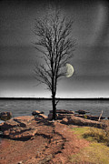 Selective Color Posters - The Lonely Tree Poster by Betty LaRue