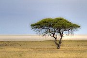 Juergen Klust Metal Prints - The lonely Tree Metal Print by Juergen Klust