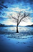 Winter Storm Metal Prints - The Lonely Tree Metal Print by Tara Turner