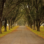 Moss Digital Art Prints - The Long Road - Central Florida Print by Mary Machare
