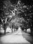 Driveway Framed Prints - The Long Road Home Framed Print by Edward Fielding