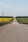 Gravel Road Photos - The Long Road Home by Susan Copley