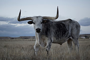 Longhorn Photo Metal Prints - The Longhorn Metal Print by Ernie Echols