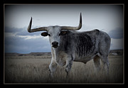 Longhorn Photo Metal Prints - The Longhorn framed Metal Print by Ernie Echols