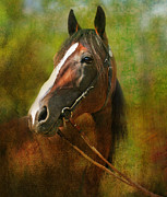 Dressage Horse Originals - The Look Back One of a Kind Original by Lyndsey Warren