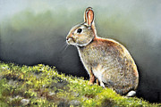 Rabbit Pastels Posters - The Lookout Poster by Paul Dene Marlor