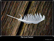 Wet Fly Prints - The Lost Feather Print by Roger Reeves