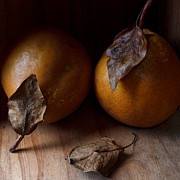 Pear Art Photo Prints - The Lost Pear Print by Constance Fein Harding