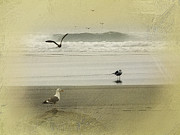 Sea Gull Photos - The Love Triangle by Diane Schuster