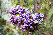 Closeup Mixed Media - The Lovely Lilac by Andee Photography