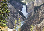 Yellowstone Photos Prints - The Lower Falls of Yellowstone River Print by Barbara Dalton