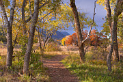 Colors Of Autumn Prints - The Lure Of The Lonely Pathway Print by Tim Reaves