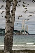 Randall Nyhof - The Mackinaw Bridge with Flying Gulls