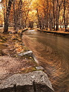 Stream Art - The magic of fall by Jorge Maia