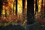 Saija  Lehtonen - The Magic of the Forest
