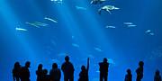 The Magnificent Open Sea Exhibit At The Monterey Bay Aquarium. Print by Jamie Pham