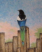 Magpies Paintings - The Magpie by Aimee Mouw